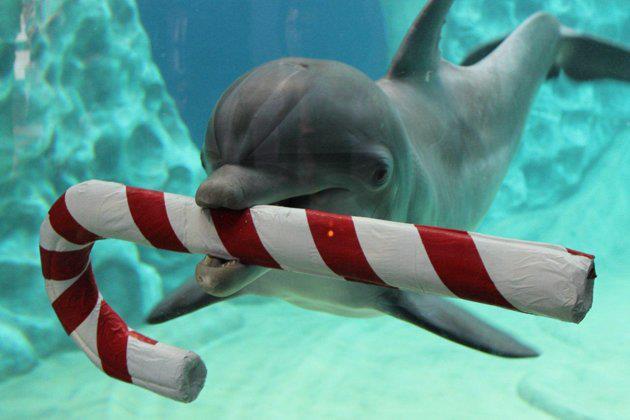 Delphin mit Zuckerstange | Quelle: IMATA